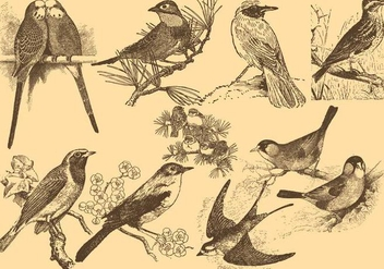 Pose NightingaleLittle Bird Drawings - Free vector #425281