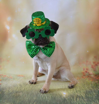 Happy St. Patrick's Day! Love, Le Boo - image #425601 gratis