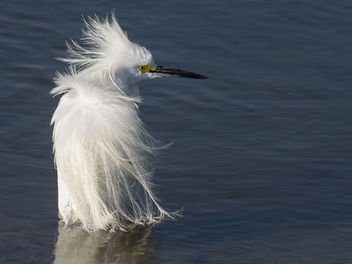 Egret Hair Day - Free image #426541