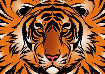 Striped Bengal Tiger Vector - Free vector #427561