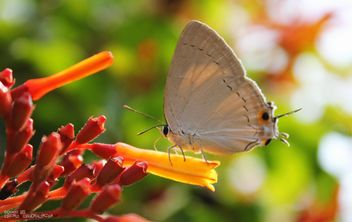 Little butterfly #insect#animal - image gratuit #428741