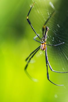 Close-up of spider in cobweb - image #428791 gratis