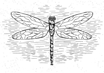 Free Vector Dragonfly Illustration - vector gratuit #429461