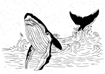 Free Vector Hand Drawn Whale - Free vector #429481