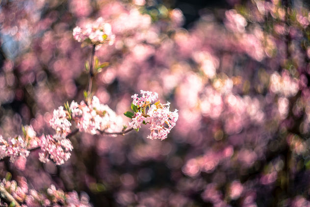 The smell of spring - Free image #429751