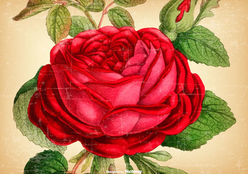 Beautiful Vintage Rose Background - vector #430411 gratis