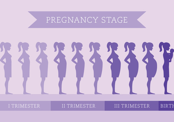 Pregnancy Stage - vector gratuit #431601