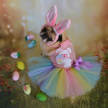 My Easter Bunny Bailey Puggins - image gratuit #432391