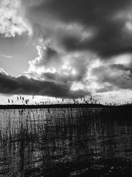 Reed Bed - image gratuit #432971