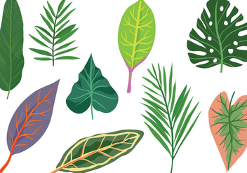 Free Exotic Leaves Vectors - vector gratuit #433931
