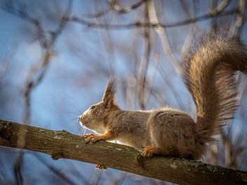 Squirrel - image gratuit #434441