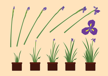 Iris Flower Grow Free Vector - бесплатный vector #435601