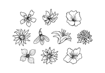 Free Flowers Hand Drawn Vector - vector gratuit #435791
