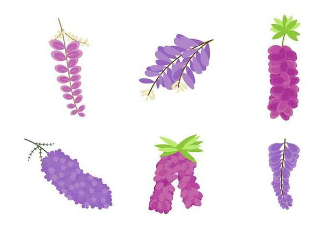 Free Beautiful Wisteria Flower Vectors - Free vector #437311