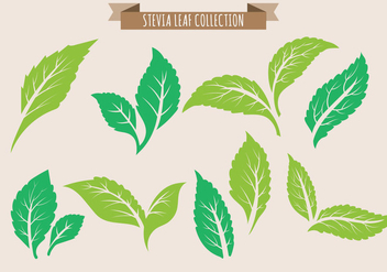 Stevia Leaf Collection - бесплатный vector #438211