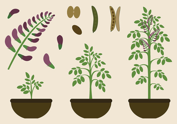Licorice Plant Free Vector - бесплатный vector #438231
