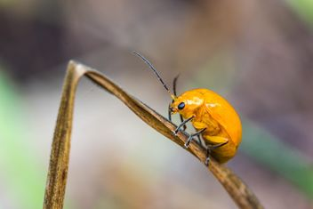 Orange beetle on grass - image gratuit #439071