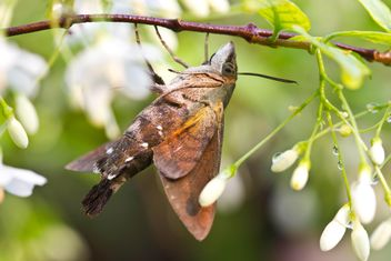 Moth on tree branch - image #439161 gratis