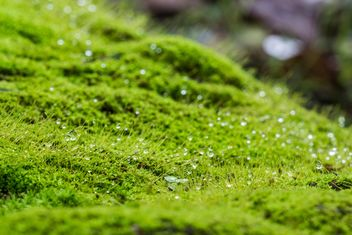Green moss background - бесплатный image #439191