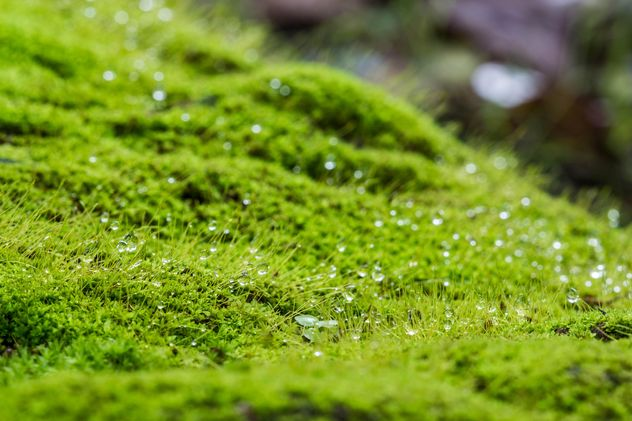 Green moss background - Free image #439191