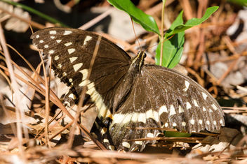 Butterfly - Kostenloses image #441771