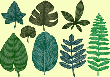 Vintage Style Botanical Leaves Vector Set 2 - Free vector #442221