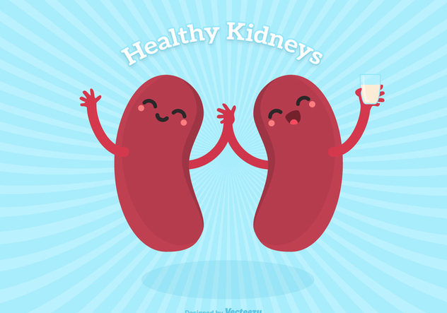 Vector Cute Cartoon Healthy Human Kidney Characters - vector gratuit #445721