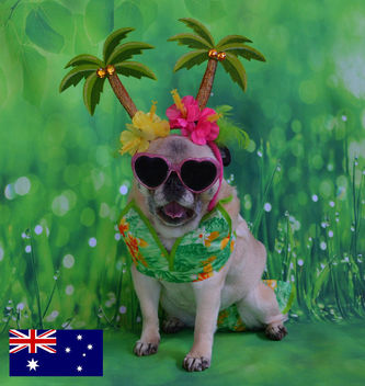 Bailey Puggins Visits Australia - бесплатный image #446981