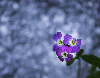 Small flowers - Free image #447151