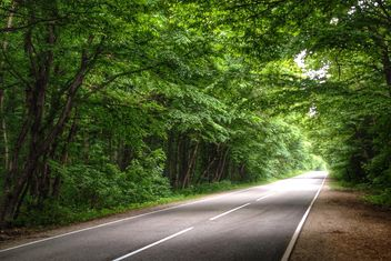 Spring forest road - image gratuit #448181