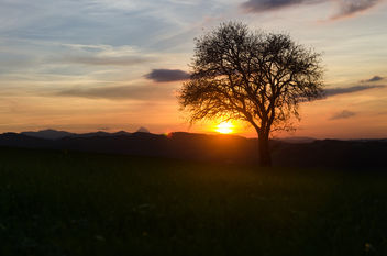 Just a Tree in a beautiful Sunset - image #449421 gratis