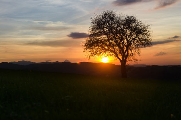 Just a Tree in a beautiful Sunset - бесплатный image #449421