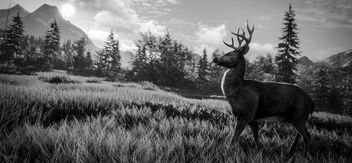 TheHunter: Call of the Wild / Black and White - Free image #449521