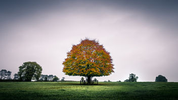 The tree - Kildare, Ireland - Landscape photography - Free image #449751