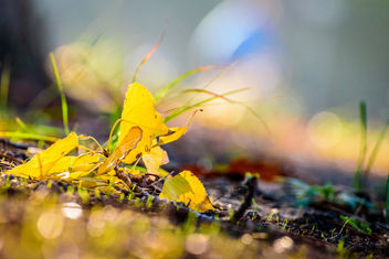 Autumn Floor Dream - image gratuit #450081