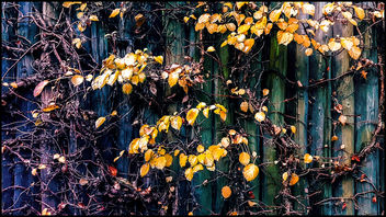 creeper plants on a wooden fence - image #450281 gratis
