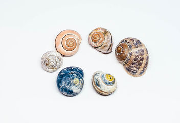 Group Of Colorful Sea Shells.jpg - Free image #450411