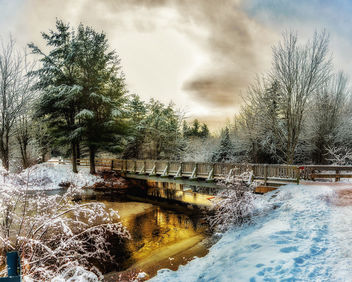 Irishtown Nature Park Christmas - бесплатный image #450891