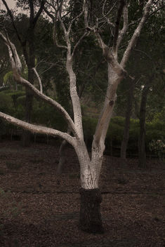 A unique looking tree - Kostenloses image #451051