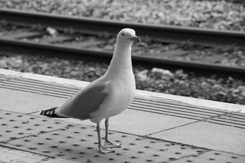 Hello - welcome to Cardiff Central - let me relieve you of your bacon sandwich or any other food you have. - Free image #451201