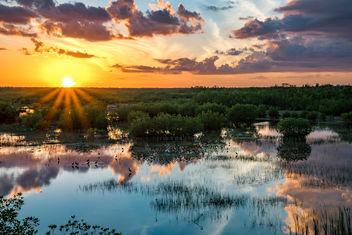Everglades Sunset Reflected - Free image #451941