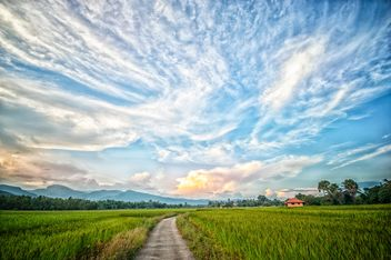 Landscape with rice field - image #452431 gratis