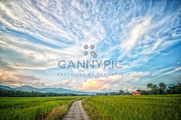 Landscape with rice field - Free image #452431
