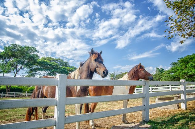 Pair of horses on farm - Free image #452531