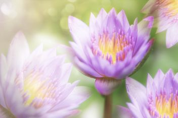 lotus close up - image #452561 gratis
