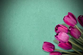 tulips on blue background - image #452591 gratis