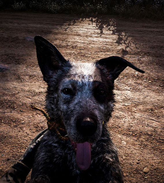 Far Cry 5 / Boomer - image gratuit #453331