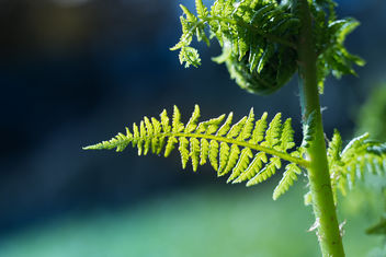 Fern in the light - image #453961 gratis