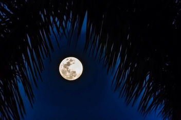 Tropical Moon - image #454401 gratis