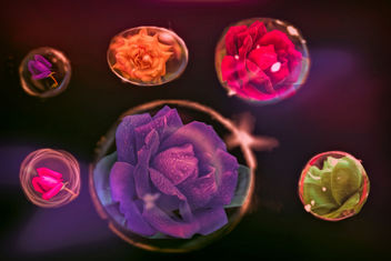 Roses in bubbles - Free image #455231